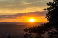 Sunset in the mountains. The last beams of the setting sun are shining over pine branches Stock Image
