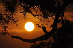 Sunset, Mountains, Orange, Branches Royalty Free Stock Photography