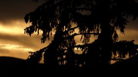 Sunset in the mountains. Pine tree and beautiful landscape. stock video footage