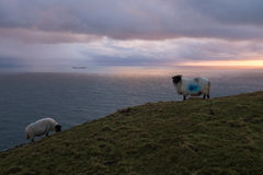Sunset in the mountains with sheep. Royalty Free Stock Photography