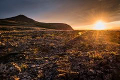 Sunset in the mountains, golden tones of flowers and grass in tundra royalty free stock image