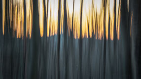 Sunset, mountains and trees. Abstract sunset in the forest Stock Image