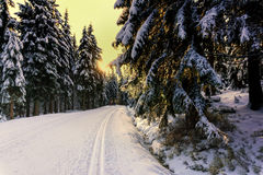 Sunset in the mountains in winter. With trees covered with fresh snow and illuminated by the sun. Cross-country groomed trails in Karkonosze,  Giant Mountains Stock Images