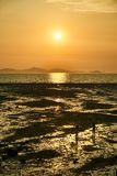 Sunset with mud flat royalty free stock image