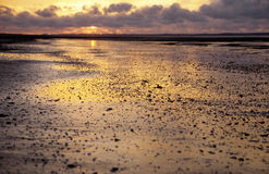 Sunset in the mudflat Royalty Free Stock Images