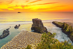Sunset at Muriwai Beach Royalty Free Stock Photos
