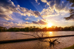 Sunset at national lake park with silhouette dry tree on foregro Stock Photos