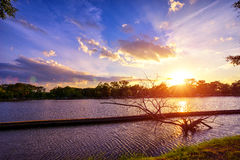 Sunset at national lake park with silhouette dry tree on foregro Stock Images