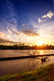 Sunset at national lake park with silhouette dry tree on foregro Stock Photo