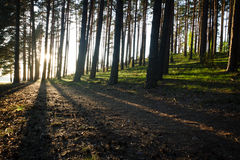 Sunset in National Park forest Royalty Free Stock Images