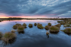 Sunset in National Park Hautes Fagnes in Belgium Royalty Free Stock Photo