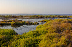 Sunset in the natural reserve of San Javier, Spain Royalty Free Stock Photo