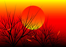 Sunset nature background Stock Image