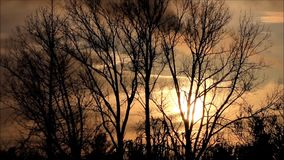 Sunset in the nature behind trees stock footage
