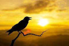 Sunset nature crows birds royalty free illustration
