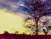 Sunset nature. Evening trees silhouette Stock Images