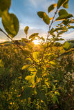 Sunset in nature Royalty Free Stock Photography