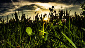 Sunset nature. Sunlight is shining throught green grass during sunset under blue sky with clouds Stock Image