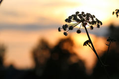 Sunset nature tree sihleuette Stock Photo