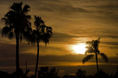 Sunset near City Beach with Palms and Bird Royalty Free Stock Photography