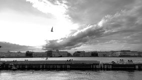 Sunset on Neva river. With no color. Seagulls Royalty Free Stock Photography