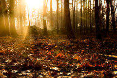 Sunset. Nice sunset with yellow orange colour in the forest Royalty Free Stock Images