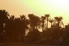 Sunset on the Nile in Egypt Stock Photography