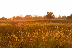 Sunset o meadow. Beautiful sunset on meadow near forest Stock Images