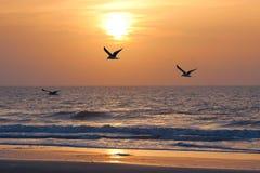 Sunset and ocean Stock Photos