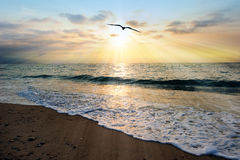 Sunset Ocean Bird. Is an ethereal ocean scenic with sun rays bursting forth from the setting sun as a gentle wave comes to shore royalty free stock photo