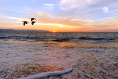 Sunset Ocean Birds. Is three silhouetted birds flying over the ocean as the sun sets on the horizon and the full moon rises in the sky Royalty Free Stock Photography