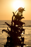 Sunset on the ocean with christmas tree in Lima, Peru Stock Image