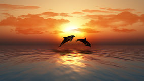 Sunset ocean with dolphins jumping Royalty Free Stock Image