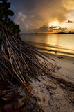 Sunset with ocean and palm roots Royalty Free Stock Photos