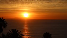 Sunset Ocean view with palm trees stock footage