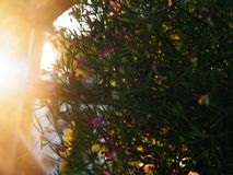 sunset ogrodu Fotografia Stock