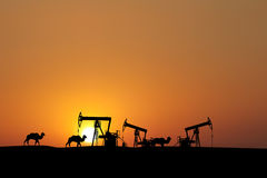 Sunset on oil fields with silhouette. Camel caravan silhouette in oilfield Stock Photography