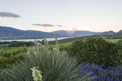 Sunset in the Okanagan Valley stock images