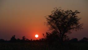Sunset at Okavango Delta in Botswana Stock Photography