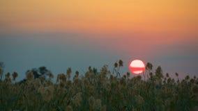 Sunset at Okavango Delta in Botswana Royalty Free Stock Photo