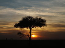 Sunset in Ol Kineyi conservancy near Masai Mara , Royalty Free Stock Image