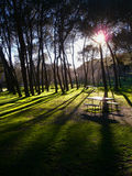 Sunset in old park Stock Photography