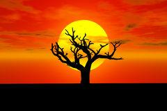 Sunset with old tree Stock Photo