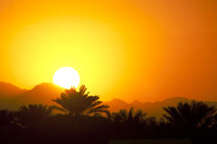 Sunset tropical. Sunset Oman sohar palmtree sunlight sunny paradise paradijs palm palms orange sunset sunny end of the day sunrise sun son zon sonne oranje red Stock Images