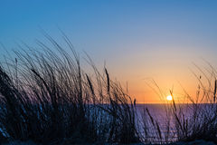 Free Sunset On Atlantic Ocean, Beach Grass Silhouette In Lacanau France Stock Photography - 87343412