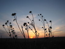 Free Sunset On The Prairie Stock Image - 91120051