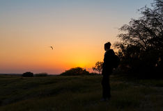 Sunset, one girl and stork flying away Stock Photography