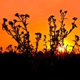 Sunset orange Royalty Free Stock Photo