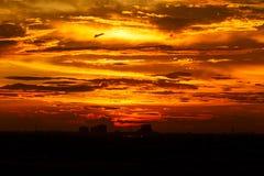 Sunset. Orange sunset over citiscape Stock Photography