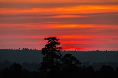 Sunset with orange and red clouds behind pine trees. Beautiful sunset with orange and red clouds behind some pine trees royalty free stock images
